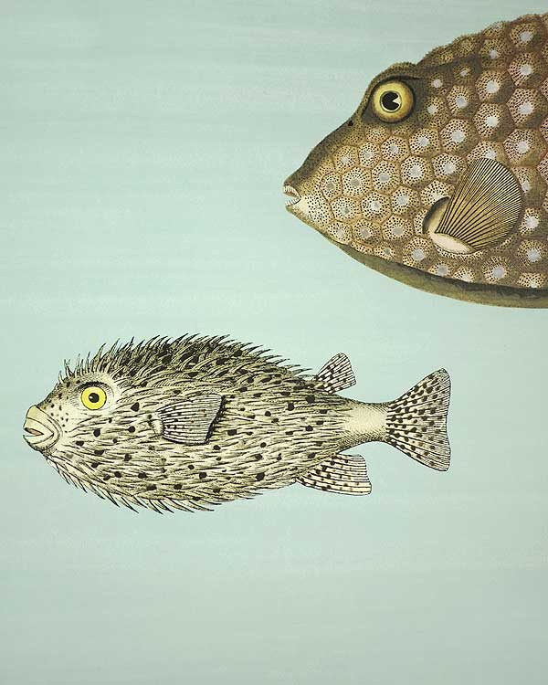 Cole and Son wall paper - Puffa Fish